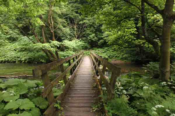 Millers Dale Walk Discover Derbyshire And The Peak District